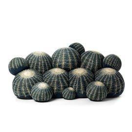Divano Cactus