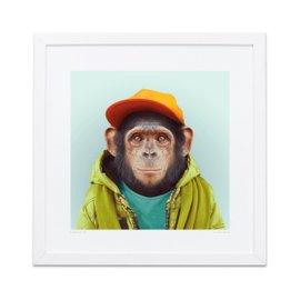 Impression Chimpanzee Zoo Portraits