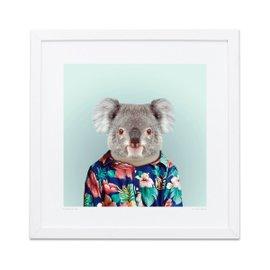 Koala Zoo Portraits print