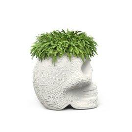 Mexico vase