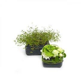 2 Recycle vases